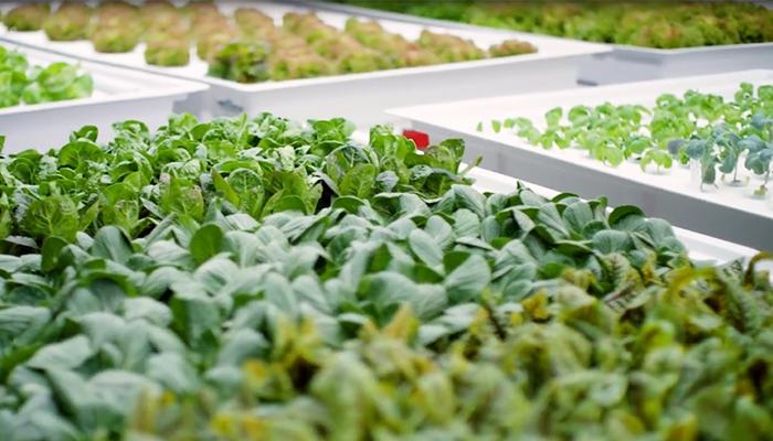 Các khoang gieo trồng bên trong nông trại thông minh