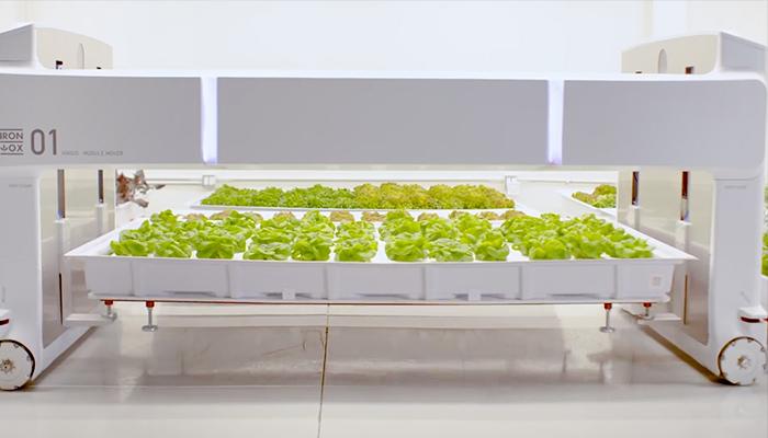 Khoang gieo trồng có thể được nâng lên khi cần