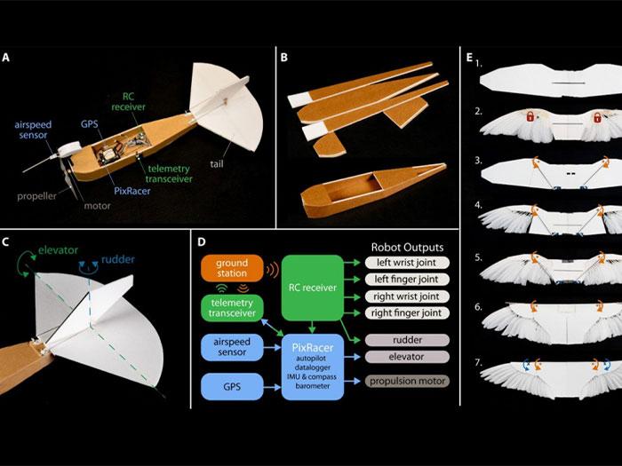 Phát triển drone dựa trên nguyên lý từ những cánh chim